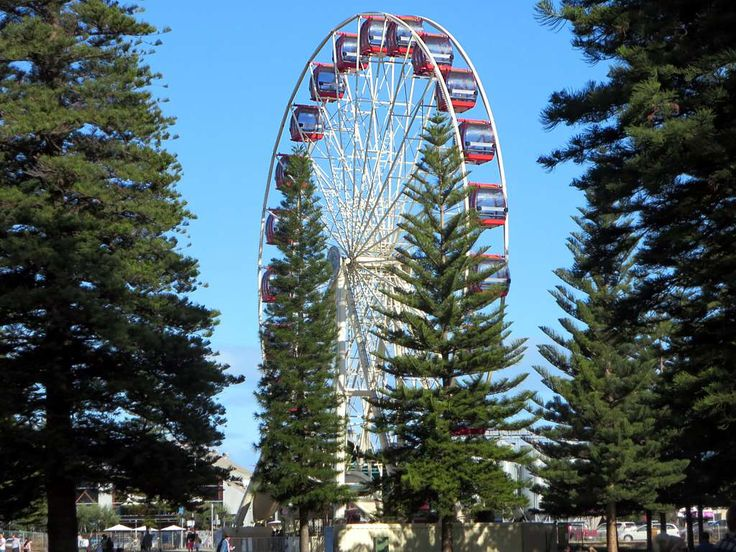 Norfolk pine trees frame a Ferris wheel in the Esplanade Reserve at Fremantle, Western Australia.