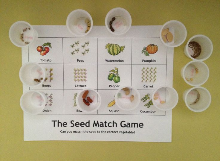Seed Match Game This Is A Good Activity For Kids