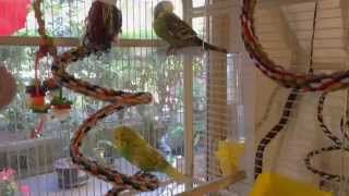 Decorating and designing the budgie cage - adding a playground / gym for them to play on one day - assembled from play stand found on amazon