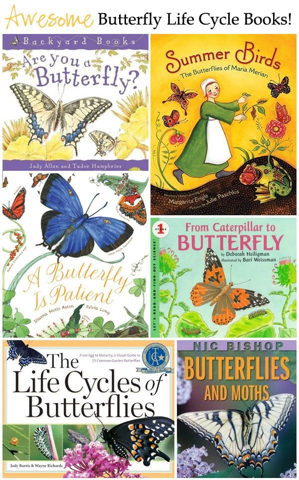 Fantastic Butterfly Life Cycle Books for Kids -- must read books for butterfly lovers!