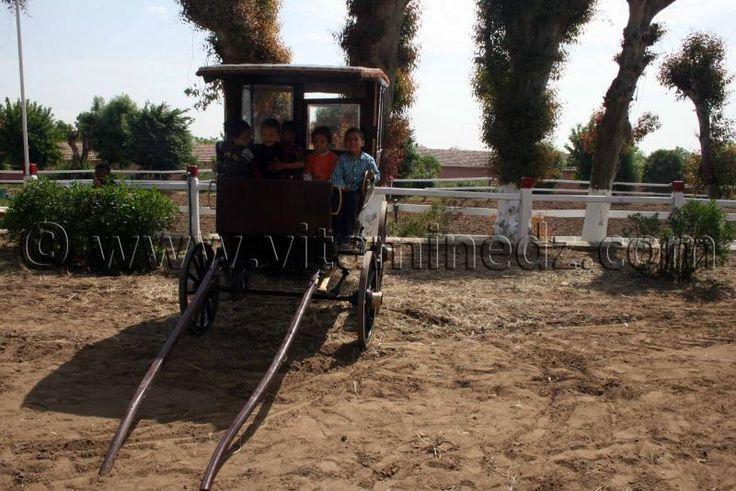 Vieux carosse Le Haras de ChaouChaoua de Tiaret, vente de chevaux arabes