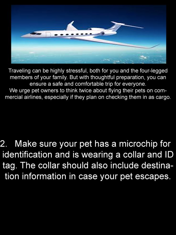 flying with your tips safe travel pets