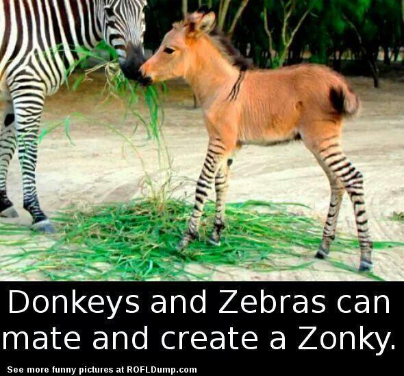 Funny Zebra Meme : Best images about meme on pinterest right bro