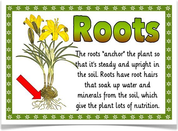 helping plants grow well treetop displays eyfs ks1 ks2 classroom display and primary. Black Bedroom Furniture Sets. Home Design Ideas