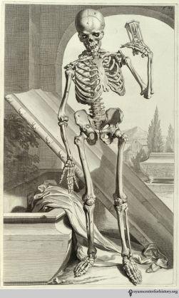 Bidloo_Anatomia_1685_Tab87_watermark