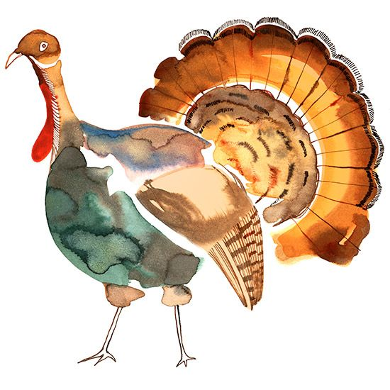 Margaret Berg - Turkey Gobble