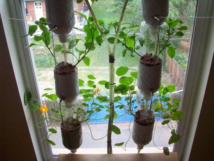 best 25+ indoor window garden ideas on pinterest   indoor herbs