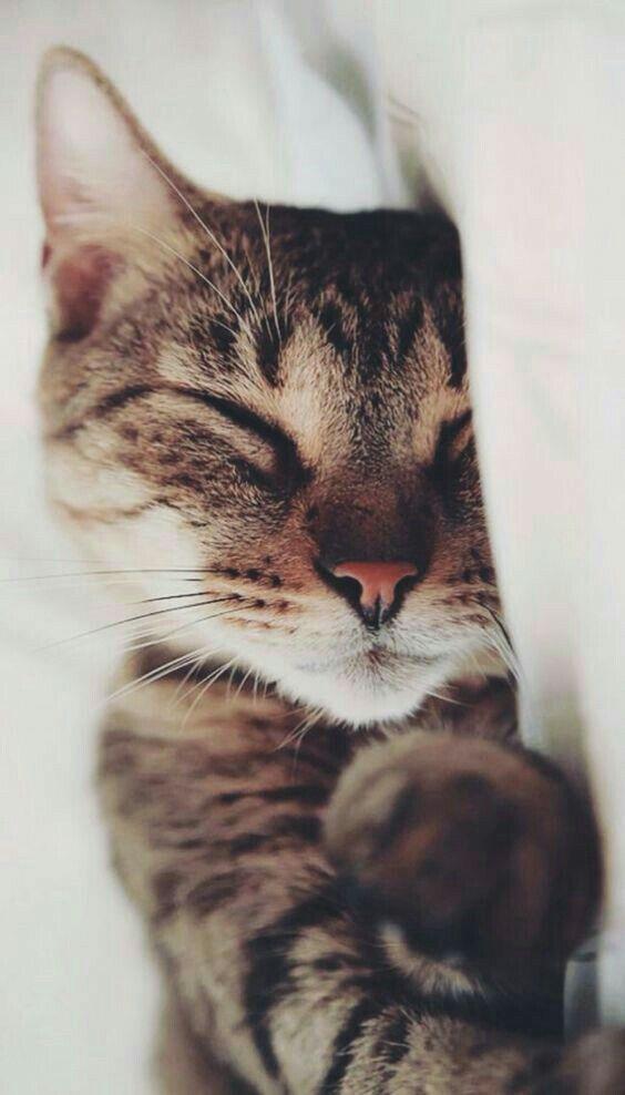 Hope your sleeping in