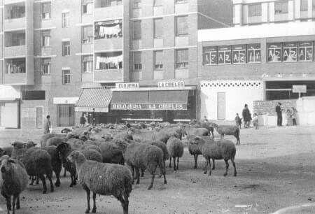 Marqués de Corbera 1964.