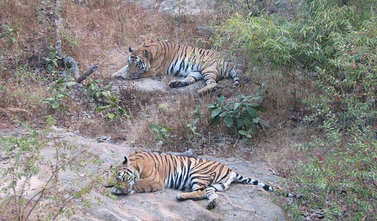 Live Wild at Bandhavgarh National Park
