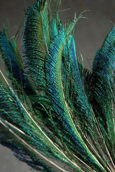 Peacock Sword Feathers 12-14 inches 100 for $45 - this site has many kinds of feathers sold in bulk - they also have bleached peacock feathers and these same ones in a smaller bundle; also, fascinators (for ideas)