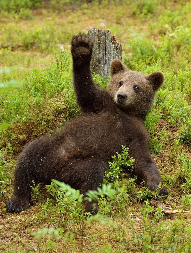 From the polar bear to the sloth bear, these animals have many fascinating traits.