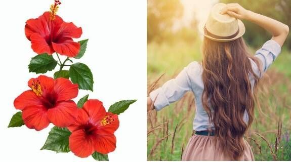 How To Use Hibiscus Flower To Get Long And Thick Hair How To Use Hibiscus Flower To Get Long And Thick Hair In 2020 Thick Hair Styles Long Hair Styles Hibiscus