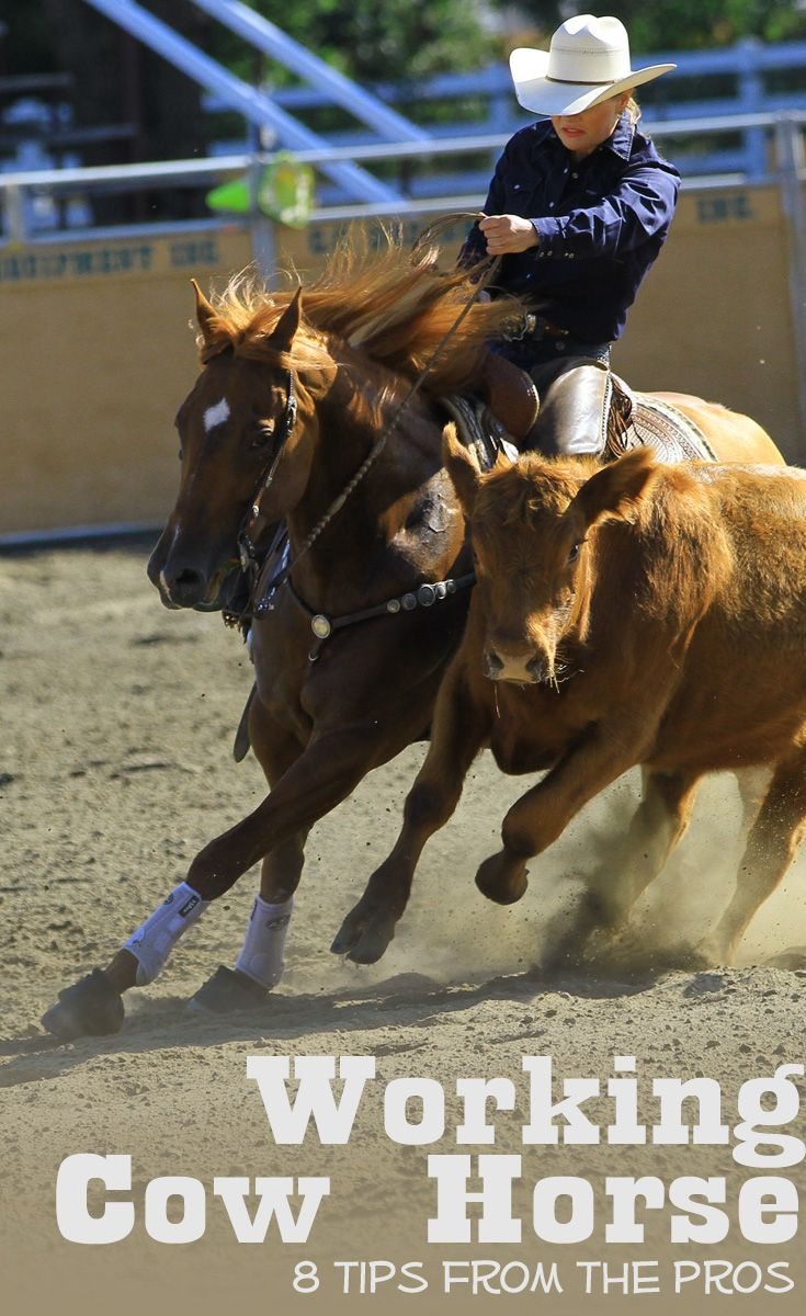 Working cow horse tips from eight top professionals, including #BobAvila #AlDunning #DougWilliamson #ToddBergen