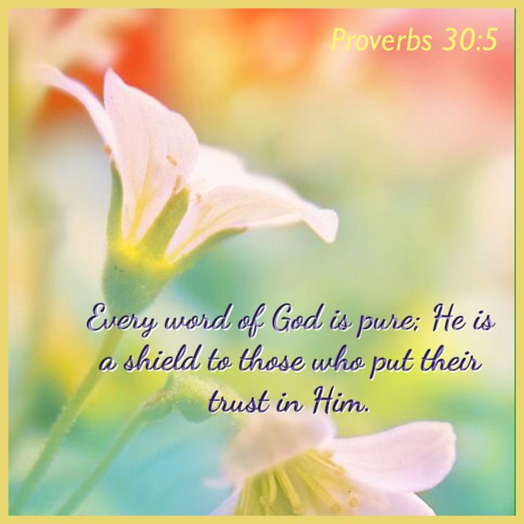 Every word of God is pure; He is a shield to those who put their trust in Him. - Proverbs 30:5