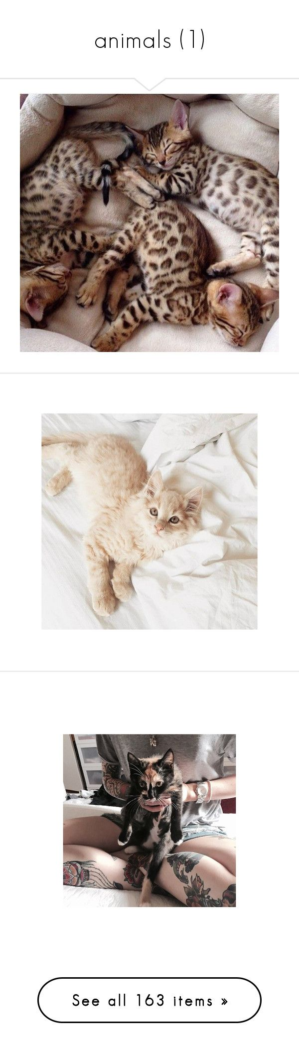 """""""animals (1)"""" by rebel-rose-icons ❤ liked on Polyvore featuring animals, pictures, photos, pics, tattoos, tops, cat top, heart tops, cat print top and rainbow top"""