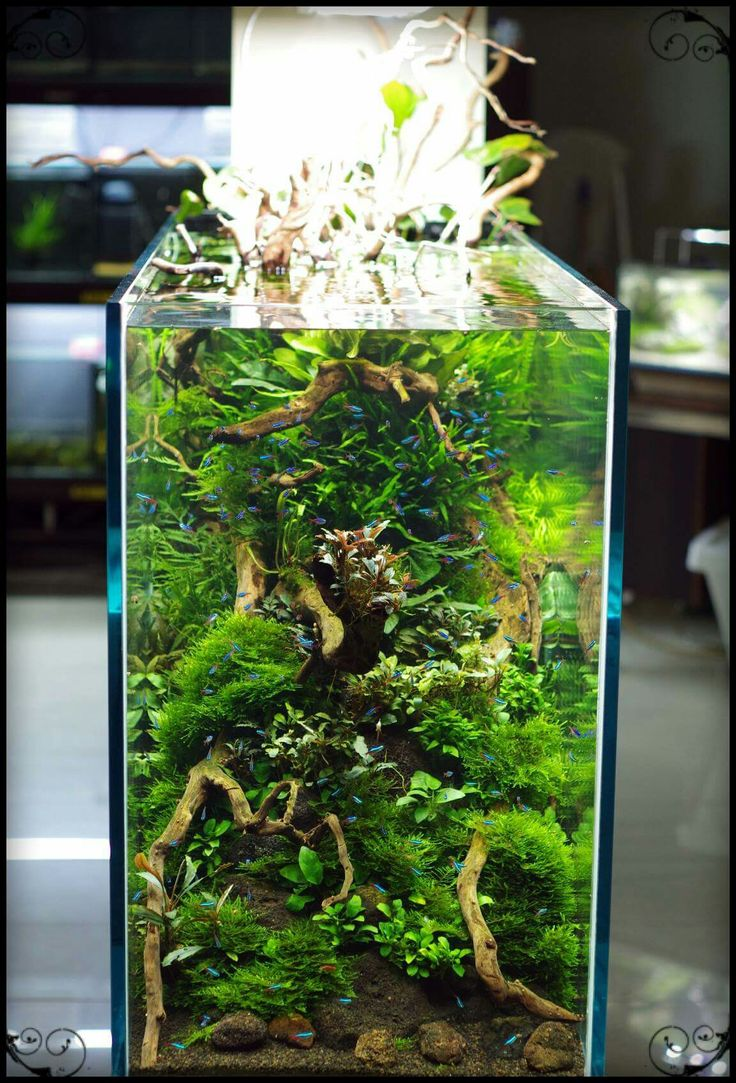 Freshwater Fish Tank Plants Sale
