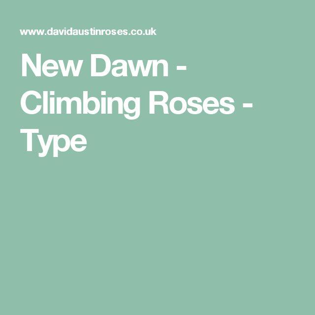 New Dawn - Climbing Roses - Type