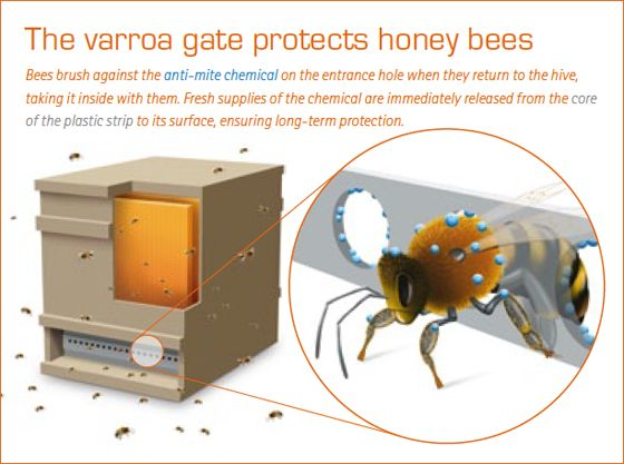 A new way of protecting bees against varroa mites