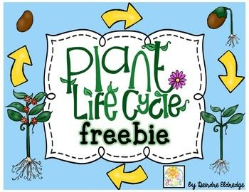 Teaching plants is so cool! I love teaching kids how we just can't live with out them. I created this little freebie to provide my students with additional resources to understand plants from seed to full growth. Included you will find1. seed observation printable2.