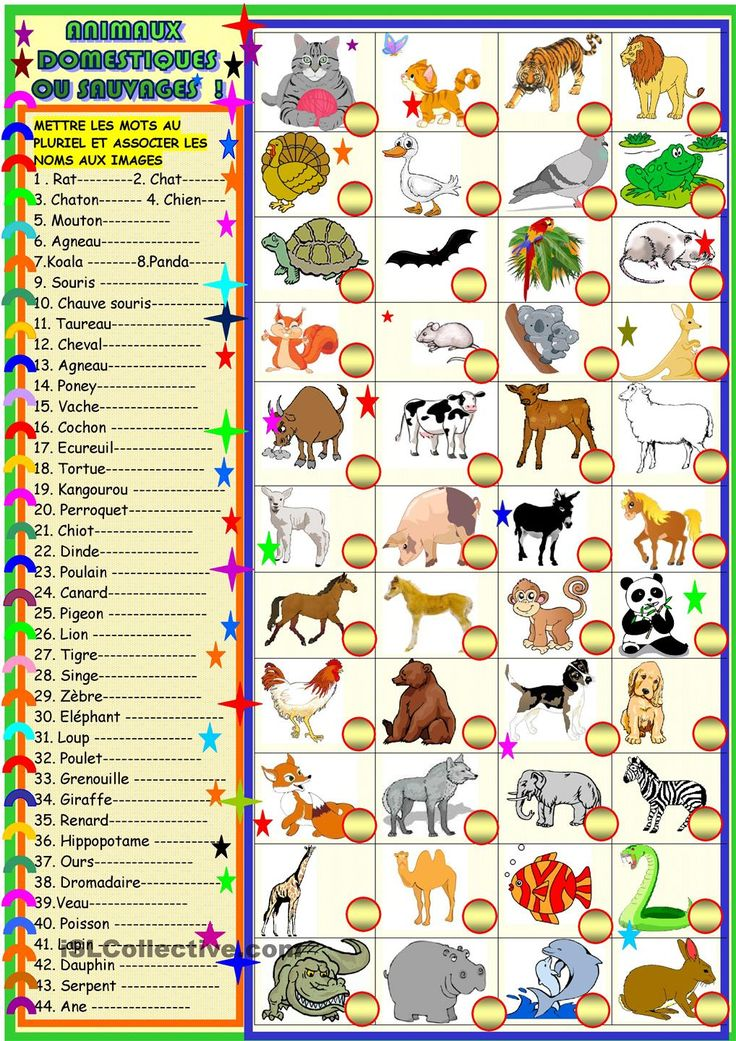 animaux domestiques ou sauvages