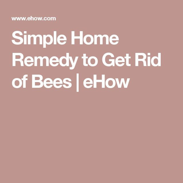 Simple Home Remedy to Get Rid of Bees   eHow