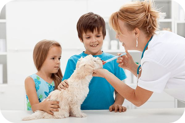 Studio City Compounding Pharmacy can compound high-quality medications for your pet