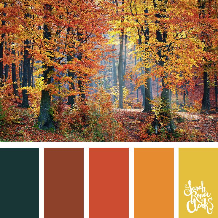 Color Schemes For Living Rooms With Grey Couch: Best 25+ Fall Color Palette Ideas On Pinterest