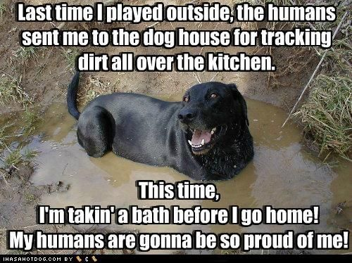 Sounds perfectly logical!: Puppies, Funny Dogs, Silly Dogs, Take A Bath, Pet, Dogs Houses, Black Labs, Animal, Bath Time