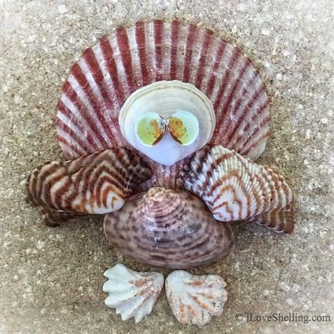 Seashell Turkey