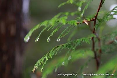 Water drops, exquisite