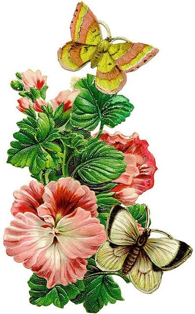 flowers w butterflies