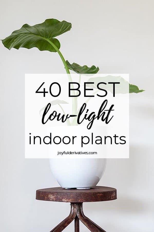 Pet Safe House Plants Houseplant