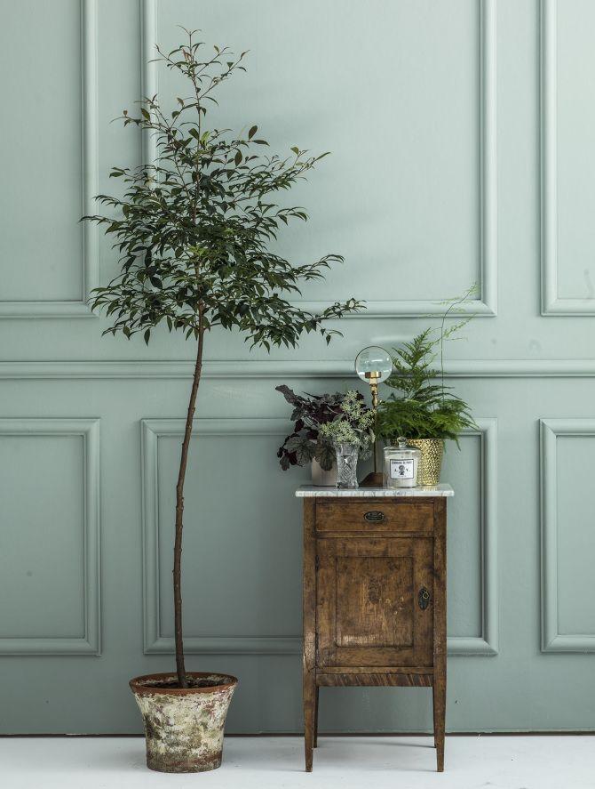Pared con molduras pintada en verde ingés claro que dialoga con el set de plantas y cómoda antigua de la imagen.