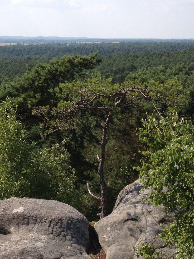 Panorama Gorges de Franchard, Forêt de Fontainebleau - 2013