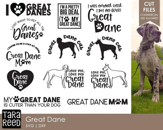 Great Dane Svg Great Dane Humor Svg Dog Svg Dog Svg For