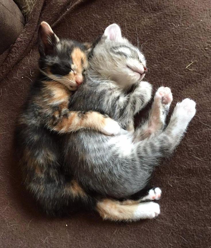 Super Les 20 meilleures images du tableau Calins de chats ! sur  PG84