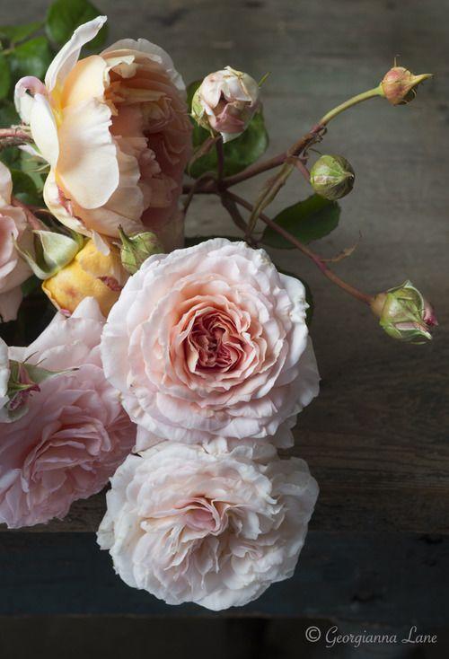 044964a12121 Les 12 meilleures images du tableau Flowers sur Pinterest   Bouquets ...