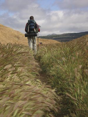 """pacific crest trail oregon - Google Search """"Amber waves of grain.."""""""