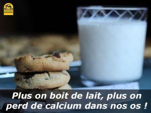 plus on boit de lait, plus on perd de calcium dans nos os !