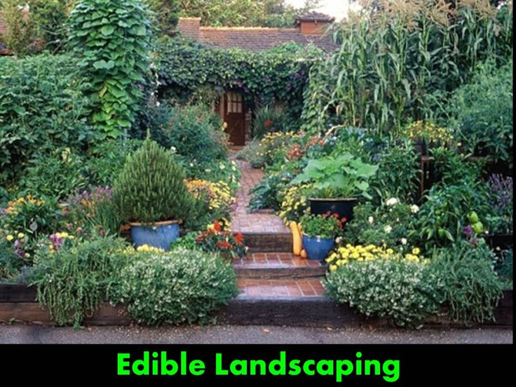 Front Yard Edible Garden Ideas 57 best garden - edible landscaping images on pinterest   potager