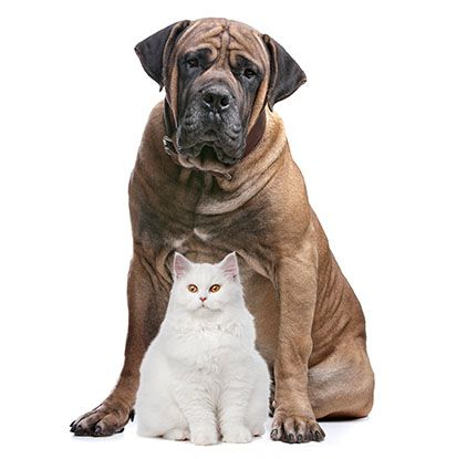 Don't let your favourite fur friend get too unhealthy.  Visit us at Tallebudgera Veterinary Clinic for great pet dietary advice