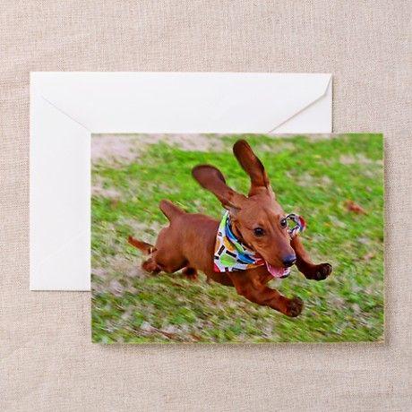 39 Best I Love Wiener Dogs Images On Pinterest