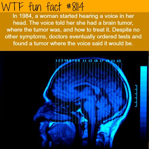 Woman hears a voice in her head… - WTF fun facts