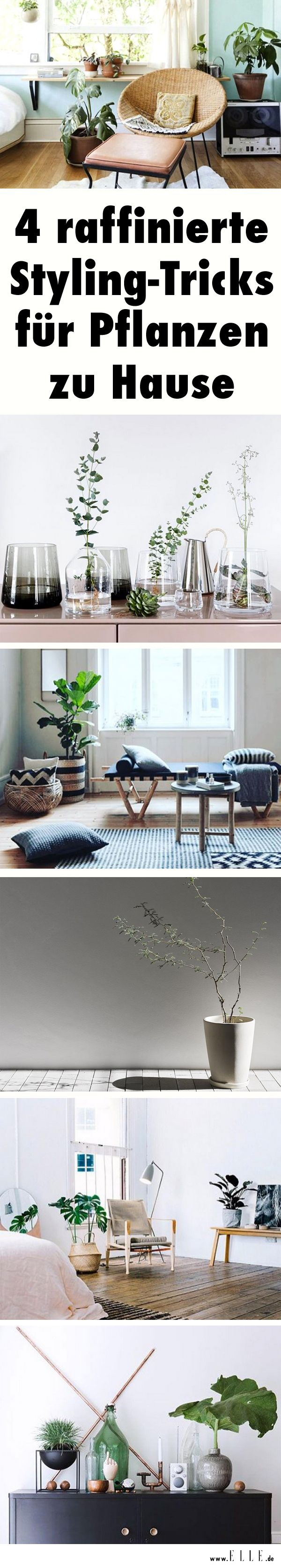 Sommergefühle Im Winter: Exotische Pflanzen Wie Palmen, Kakteen U0026 Co Feiern  Ein Interior