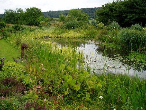 1000 images about wildlife pond on pinterest for Wildlife pond design uk