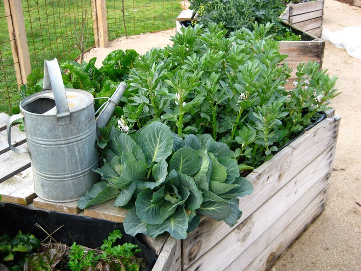 The Little Veggie Patch Co – Seed to Table -The edible vegie garden specialists |  Apple Crates