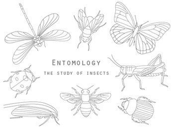 Insects embroidery pattern