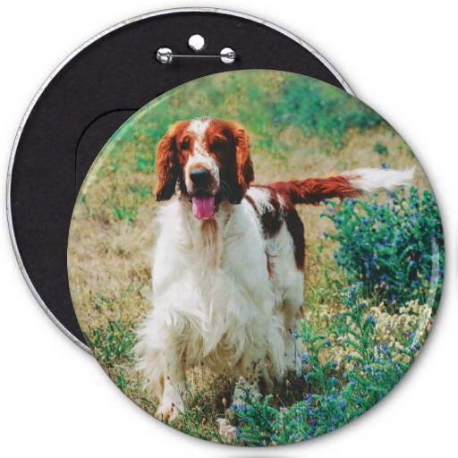 """Welsh Springer Spaniel Button. Five sizes from 1.25""""-6"""" in diameter. Printed on 100% Recycled Paper. Covered with scratch- and UV-resistant Mylar."""
