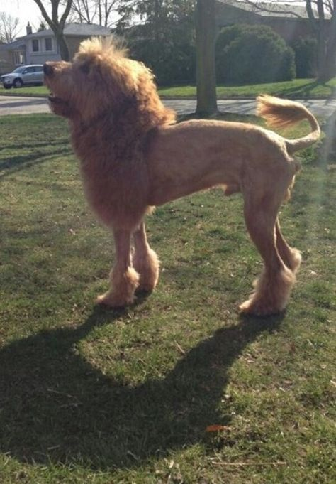 best groom job ever. @Amanda Snelson Snelson Snelson Snelson Piazza you should do this to a dog at work!